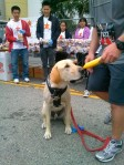 Dog who ran the 5k (note his medal)!